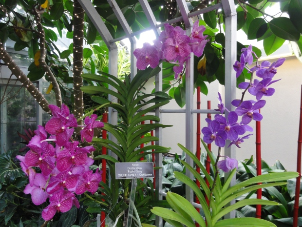 Orchids in bloom!